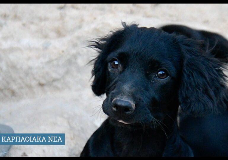 Τι προβλέπει το νέο νομοσχέδιο για τα ζώα συντροφιάς