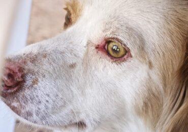 Κάθειρξη έως δέκα χρόνια για κακομεταχείριση ζώων: Κατατέθηκε στη Βουλή η τροπολογία