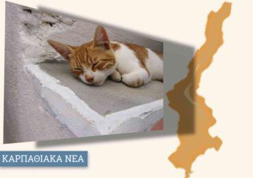 420 κιλά ξηράς τροφής για τα αδέσποτα παρέλαβε ο Δήμος Καρπάθου