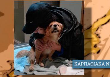 Τραυματισμένο σκυλί χρειάζεται άμεση μεταφορά στην Αθήνα