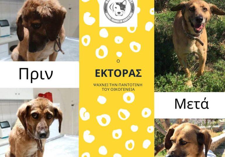 Ψάχνει σπίτι ο σκυλάκος με το θλιμμένο βλέμμα που ζούσε 4 χρόνια, μόνιμα δεμένος, σε χωράφι της Καρπάθου