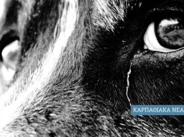 Ο νέος νόμος 4830/2021 για τα ζώα συντροφιάς